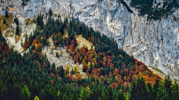 landscape-tree-nature-forest-wilderness-mountain-356001-pxhere.com.jpg